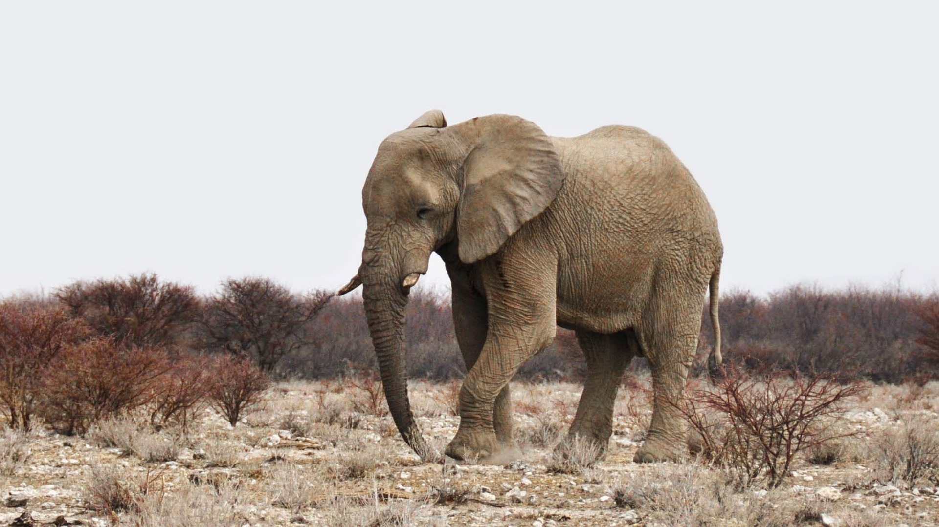 """Verhandlungstraining im Alltag oder """"Wie isst man einen Elefanten?"""""""